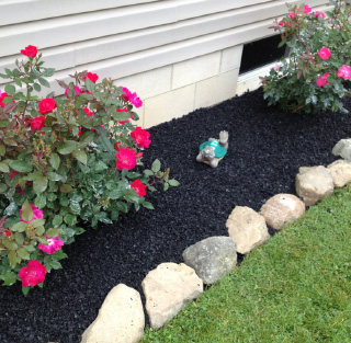 Black Mulches